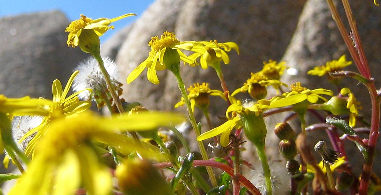 Slider Blumen