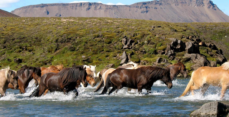 Slider Pferde
